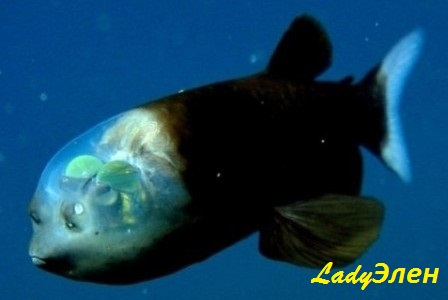 samye-neobychnye-ryby